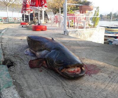 Balıkçının ağına 80 kiloluk yayın balığı takıldı