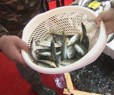 İki balıktan birinde mikroplastik bulundu