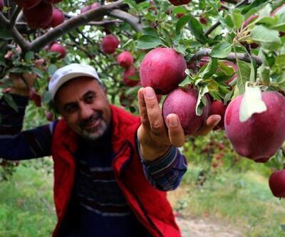 'En güzel elma' ihracatı
