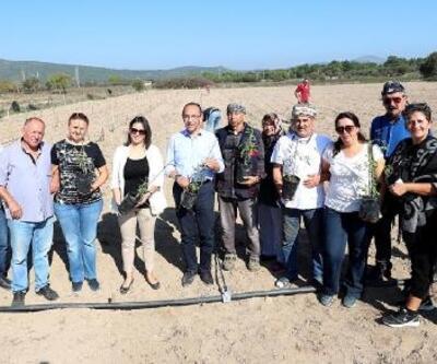 Urla'da Goji Berry üretimi artıyor