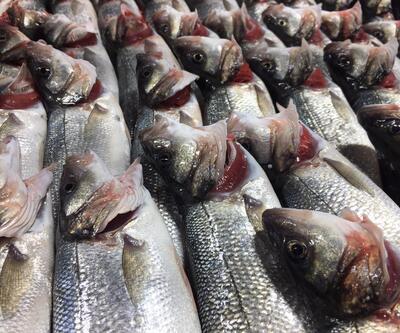 Balıkta inanılmaz hile... Bazı balıkçılar solungaçlarını kırmızıya boyuyor