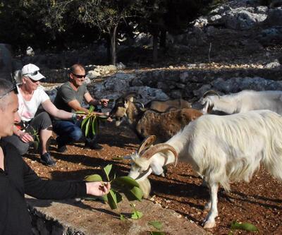 Bu adanın tek sahibi keçiler