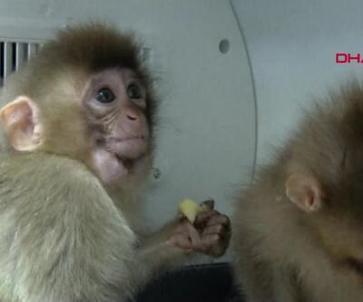 Sınırda yakalanan maymunlar Gaziantep'e getirildi