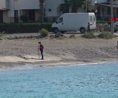 Kedilerin ölümünden sonra sahilde balon balığı aradılar