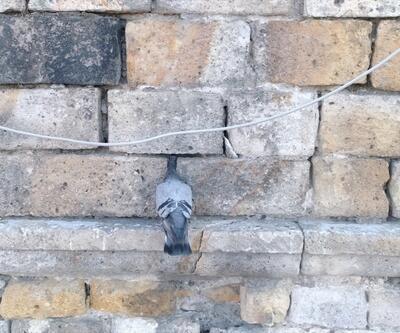 Başı duvara sıkışan güvercini itfaiye ekipleri kurtardı
