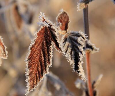 Kırağı tutan bitkiler kartpostallık görüntüler oluşturdu