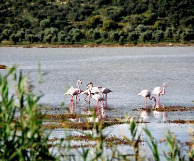 Flamingolar, sulak alanda görsel şölen oluşturdu