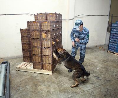 Azerbaycan sınırında bir tona yakın uyuşturucu ele geçirildi