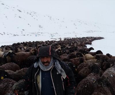 Mahsur kalan 2 bin 500 koyun kurtarıldı