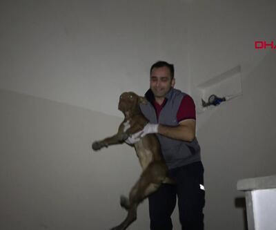 Sultangazi'de apartmanda pitbull paniği