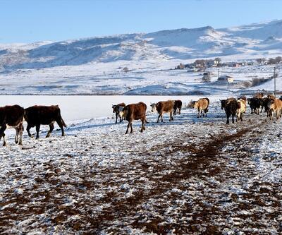 Ardahan'da Aktaş Gölü'nün yüzeyi buz tuttu