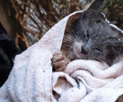 Yağmur suyu kanalında sıkışan yavru kedi, kurtarıldı