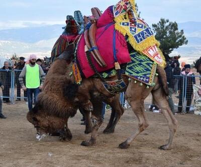 Develer, Karacasu'da güreşti