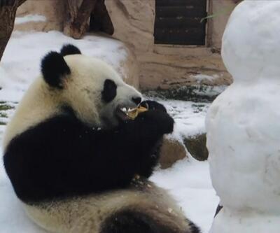 Panda kardan adamı yedi