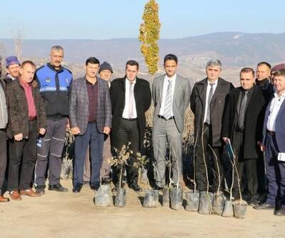 Demirci'de üreticilere ceviz desteği