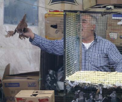 İhale usulü güvercin satışına yoğun ilgi