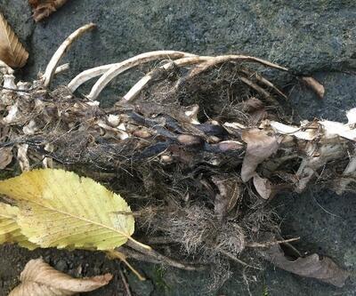 Trabzon'daki gizemli iskeletin hangi hayvana ait olduğu belli oldu