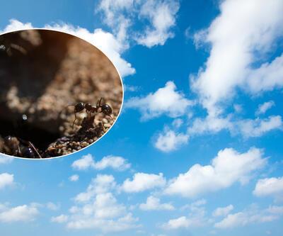 Düzce depreminden 1 gün önce fark etti... Karıncalar ve bulutların depremle ilişkisi