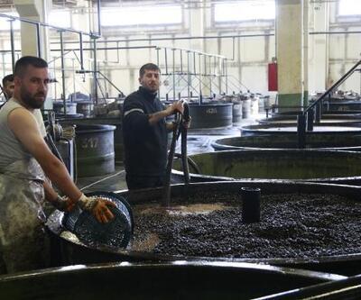 Zeytin alımları 3 bin 870 tonu buldu