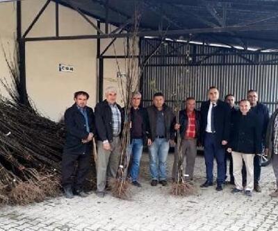 Simav'da çiftçilere toplam 4 bin ayva fidanı dağıtıldı