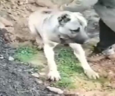Zehirlendiği öne sürülen köpeğin görüntüleri, tepki çekti