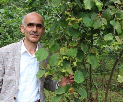 Giresun Ziraat Odası: Fındık 18,5 lira ama üreticide fındık yok