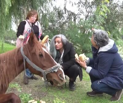 Yaşlanan at kaderine terk edildi