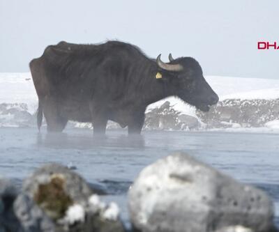 Mandalar Kaz Gölü'nden besleniyor
