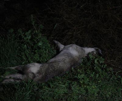 Köpeklerin saldırısına uğrayan kişi, öldü