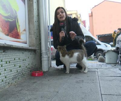 Soğuk havada sokak hayvanları