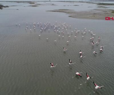 Flamingolar Gala'ya geliyor