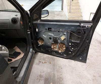 Aracın kapı döşemesine gizlenen 5 bin 450 su kaplumbağası ele geçirildi