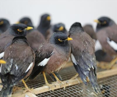 Van'da ticareti yasak 75 kuş ele geçirildi