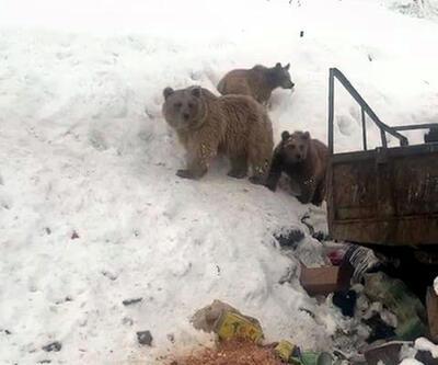 Ayı ev yavruları çöplükte yiyecek ararken görüntülendi