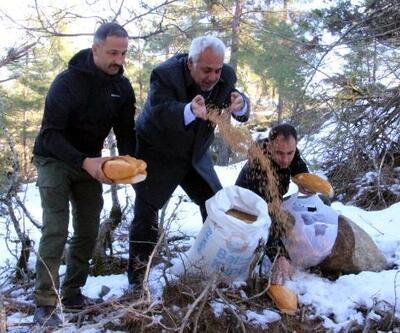Feke'de yabani hayvanlar için doğaya yem bırakıldı