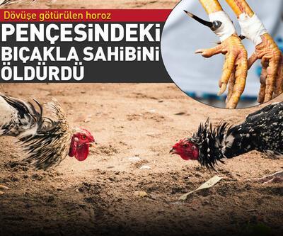 Pençesine bağlı bıçakla dövüşmeye hazırlanan horoz sahibini öldürdü