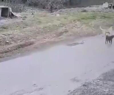 Köpeği ezen belediye çalışanı işten çıkarıldı