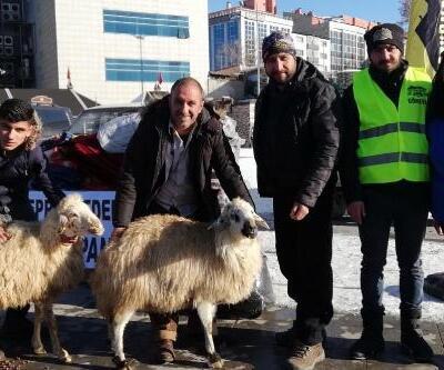 Depremzedelere iki koyununu gönderdi