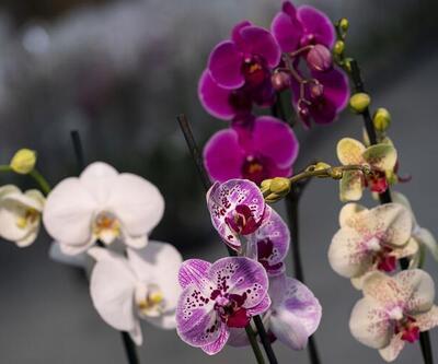 Çiçekçiler, Sevgililer Günü için hazırlıklara başladı
