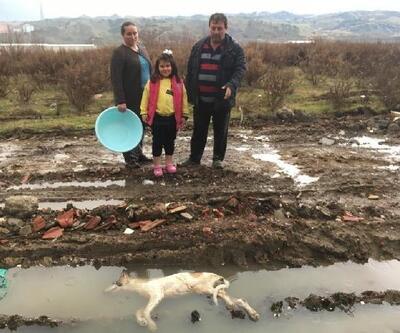 Besledikleri sokak köpeklerinden 3'ünü ölü buldular