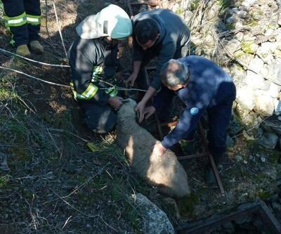 Kuyuya düşen koçu itfaiye ekipleri kurtardı