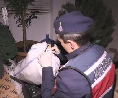 Villanın içinde kurduğu serada uyuşturucu üreten kadın yakalandı