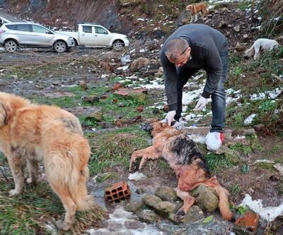 5 köpeğin bedeninde kurşun izi