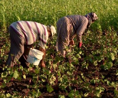 Tarım Bakanlığı seferberlik başlattı
