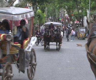 İBB Adalar'daki atları satın alıyor