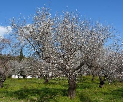 Datça'ya bahar geldi