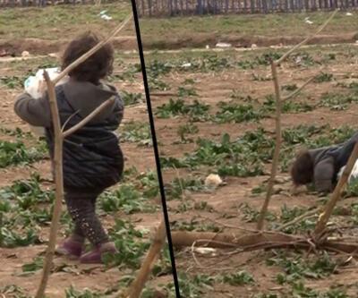 Suriyeli minik mültecinin ağır yükü