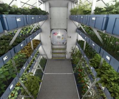 Mars'ta besin üretmek mümkün olabilir mi?