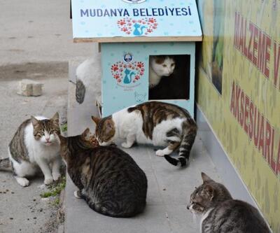 Mudanya'da can dostları unutulmadı