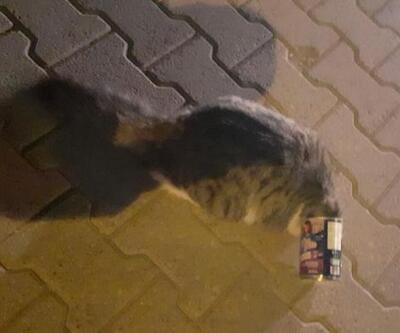 Başı mama kutusuna sıkışan kedi kurtarıldı